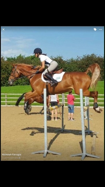 Showjumper school mistress