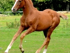 Stunning Yearling Filly