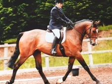 Fantastic Riding Club Allrounder
