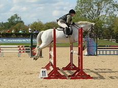 Experienced Show Jumping Pony