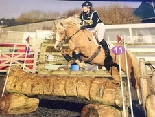 Mothers Dream - Top Class Pony Club Allrounder