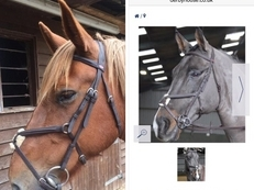 John Whitaker Mexican grackle bridle