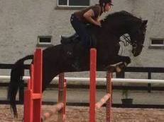 Ars Vivendi Top Eventer/Showjumper for sale