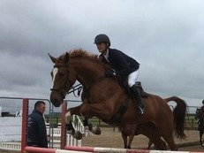 Fabulous Hunting Prospect 17.2hh 7 years mare
