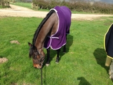 15. 2hh lovely hacking mare by Medoc