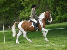 Stunning 15. 3h Competition Horse