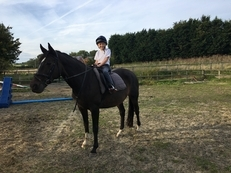 Rider Wanted for 16.3hh mare Are you looking for a horse to ride?   16.3hh 15 year old mare looking for experienced rider only. Currently wasted as I have no time for her...  Stabled in Kenardington (20mins from Ashford).  Terms negotiable but help in exc