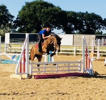 14.1hh 10 years Connermara Bay Mare - Perfect Confidence Giver