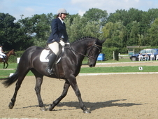 Stunning 16hh black Irish Mare