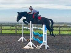 Fun and Safe 16.1hh Mare by Colin Diamond