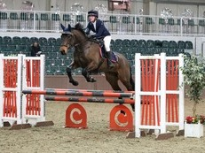 Talented, 9 year old, 17hh ISH gelding, with Crusing bloodlines.