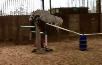 KWPN Horses for Sale | Horsemart