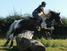 15. 1 fun jumping pony for sale - experienced rider only
