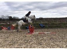 Connemara X Gelding 14hh 10-yr-old - great jumping pony