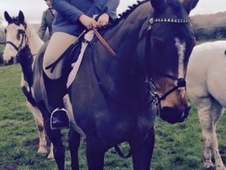 17. 1hh Hunting/ All Rounder Gentleman