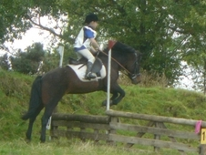 12. 2hh Second Pony
