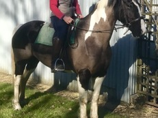 Wonderful fun 148cm Irish mare