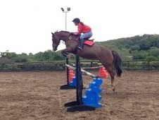 15. 2hh All Rounder for Loan
