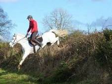 video added - 146cm 6yr old mare, super young competition pony