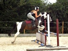 mothers dream / jumping pony
