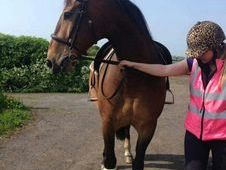 Gelding- Sharer wanted