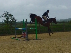 Top scopey compact mare to take anybody show jumping up the levels