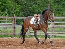 Re-Training Rider Available Surrey