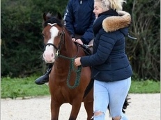 lead Rein Pony / Pony Club Pony