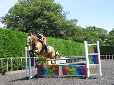 SHOWJUMPING SCHOOLMASTER AND HACK