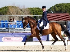 Eye-catching & Outstanding Oldenburg Dressage Schoolmaster