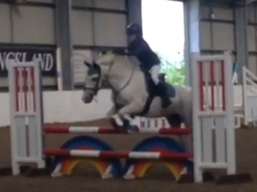 Super 13hh competition pony