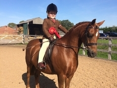 Absolute superstar/mothers dream pony/FR/SHP/WHP