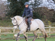 Stunning lightweight Irish Cob Mare