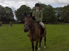 Lovely 14.3hh 6 yr old ISH All rounder Project (No Novices)