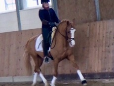 Super Dressage sports Pony