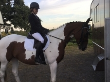 Eventer, pony club, allrounder and hunter