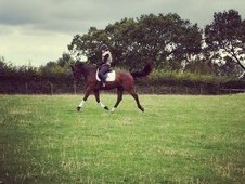 Exciting Dressage / Showjumping Prospect