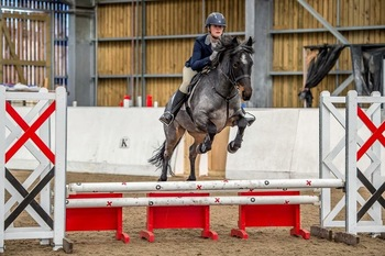 All rounder/hunting pony/mother daughter share