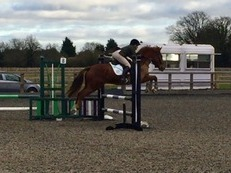 Fantastic Pony Club/Event Pony for sale!