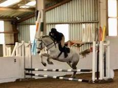 Riding Club Allrounder