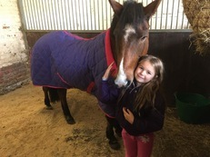 13.1-2hh New forest mare