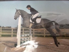 Eye catching 16. 1hh Warmblood Mare
