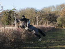 15. 2hh Black Mare 13yrs old Proven hunter