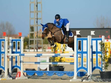 COMPETITIVE & CAREFUL HORSE FOR AN EXPERIENCED AMATEUR