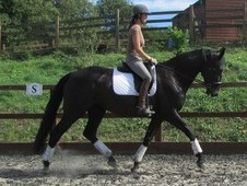 Stunning Mare with great potential