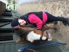 11hh gelding lead rein pony for sale