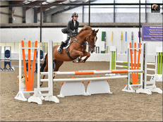 17hh competition horse for share