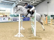Talented Irish Sport Horse