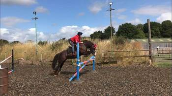 **FIRST TO SEE WILL BUY- IF LOOKING FOR A JUMPING PONY**