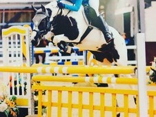 FIZZYPOP BS MARE 15. 1 SHOWJUMPER ALL ROUNDER HUNTER QUIRKY & FUN